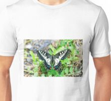 Anise swallowtail butterfly (Papilio zelicaon) Unisex T-Shirt