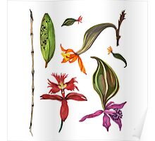 Orchids and Ink (Flowers)  Poster