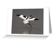 Avocet Greeting Card