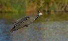 Fowl Flight by Macky