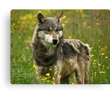 Wolf in Springtime Canvas Print