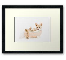 Animal Rescue Portraits- Buff Kitten in the Bath Framed Print