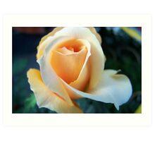A Rose That Always Bring A Smile Art Print