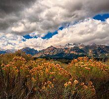 Wild Flowers and Teton Mountains III by KellyHeaton