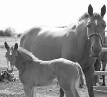 Mare and Foal  by Abigail Jennings