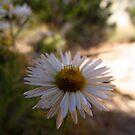 Desert Flower by Aaron Baker