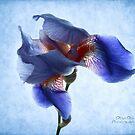 Dance the Iris dance with me... by Olga
