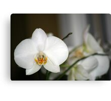 Beauty in White Canvas Print