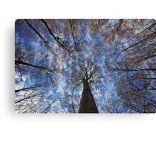 Winter sky Canvas Print