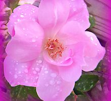 Textured Rose With Raindrops by WeeZie