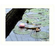Bush Lily Art Print