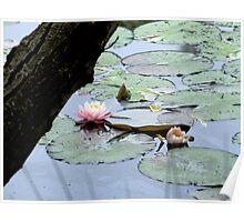 Bush Lily Poster