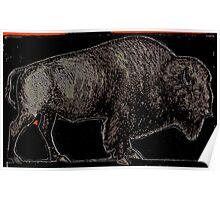 Black Buffalo Poster