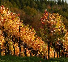 Autumn At The Vineyard by Arizonagirl