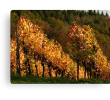 Autumn At The Vineyard Canvas Print
