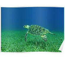Hawksbill Turtle 2 Poster