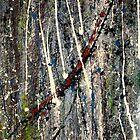 bark - Comboyne plateau NSW, Australia by Bubaloo Fahy