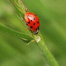 Lady Bug by Barbara Anderson