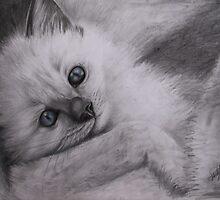 Ragdoll Kitten by Felicity Deverell