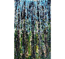 blue forest - Comboyne plateau NSW, Australia Photographic Print