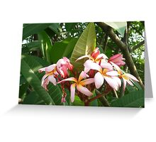 dazziling_purple_flowers_in_bright_sunlight Greeting Card