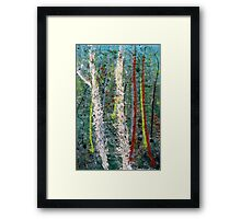 the welcome home - Blue quandongs in forest 1. Main Arm valley NSW, Astralia Framed Print