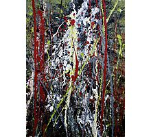 red forest with waterfall - Main Arm valley NSW, Australia Photographic Print