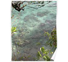 The blue sea corals Poster