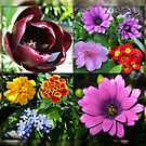 So long, Spring! Hello, Summer! Sunshine Flower Collage by BlueMoonRose
