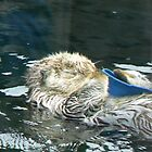 Sleepy Otter by Brittani Brooke