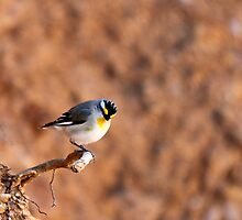 Striated Pardalote by Linda Sass by EnviroKey