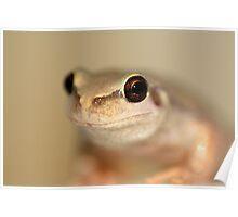 Desert Tree Frog by Steve Sass Poster