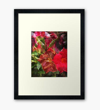Dipladenia Framed Print