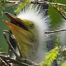 Very Young White Egret by TJ Baccari Photography