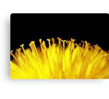 Pollen sunrise Canvas Print