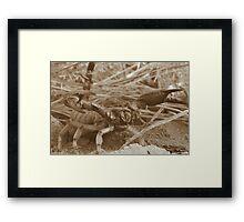 Desert Sting Framed Print