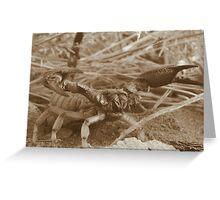 Desert Sting Greeting Card