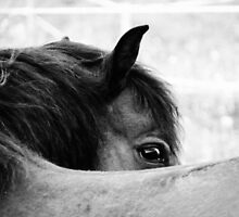 3.6.2011: Look of the Pony by Petri Volanen