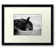 3.6.2011: Look of the Pony Framed Print