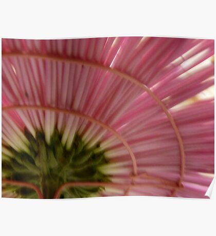 Under The Skirt of a Pink Chrysanthemum Poster