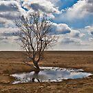 Little Tree on the Prairie by Bryan D. Spellman