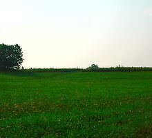 Green meadow by Eduard Isakov