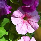 Garden flowers close-up by Eduard Isakov