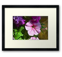 Garden flowers close-up Framed Print