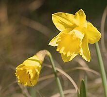 Yellow Flower by Jacob Tietze