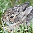 My baby bunny by ZeeZeeshots