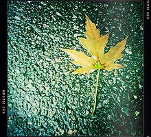 Cold Cement, Wet Leaf by SheSmiles