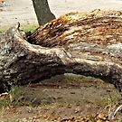 Natural Bench by endomental Artistry