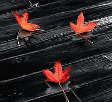 Three Red Leaves after Rain by Ellen Cotton