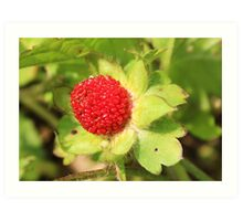 wild strawberry growing in our yard Art Print
